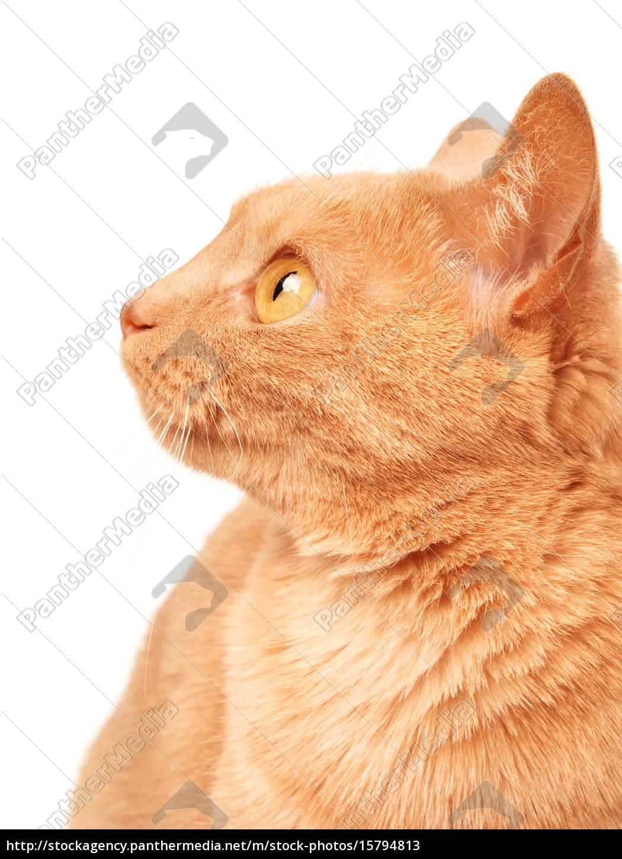 cat, cat, cat, cat - 15794813