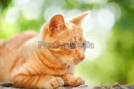 domestic cat outdoors domestic cat outdoors