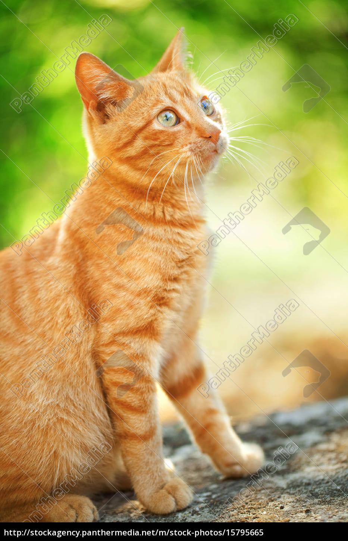 domestic, cat, outdoors, domestic, cat, outdoors, domestic, cat - 15795665