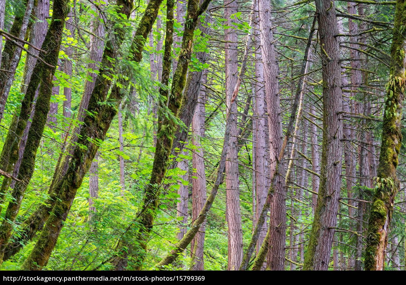 rain, forest, in, oregon - 15799369