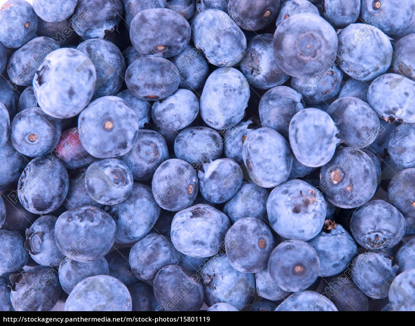 blueberries, blueberries, blueberries, blueberries - 15801119