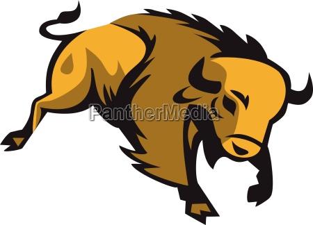 american bison charging retro