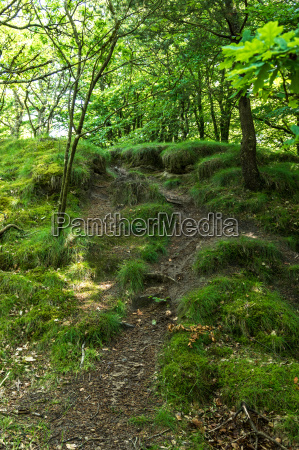 forest impression on the blaberg in