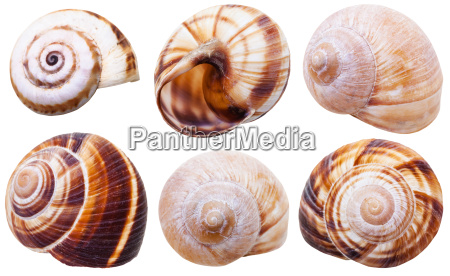 set of spiral mollusc shells of