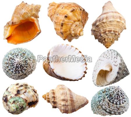 set of spiral shells of sea