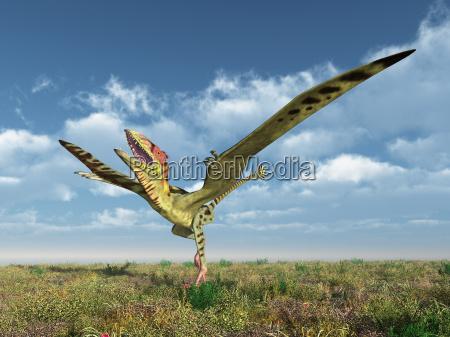 flying dinosaur peteinosaurus