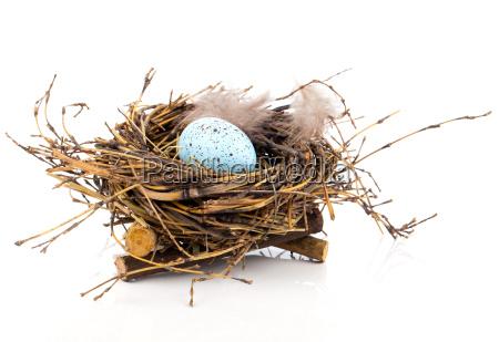 easter egg in the birds nest