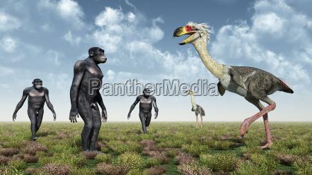 homo habilis and the terror bird