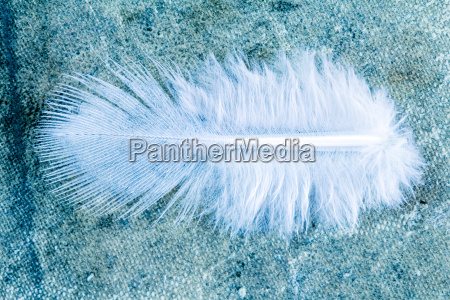 close up view of feather