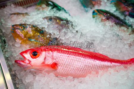 fresh fish in wet market