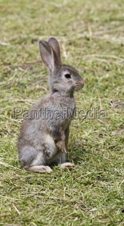 hare child on green meadow