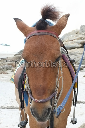brown horse on beach for tourists