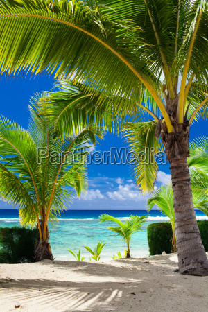 few palm trees overlooking tropical beach