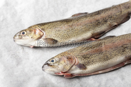 raw trout on white paper