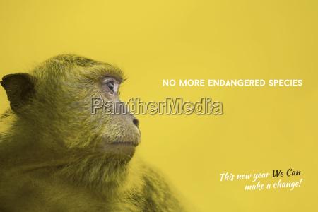 endangered species awareness with wild monkey