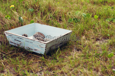 vintage box with pine cones on