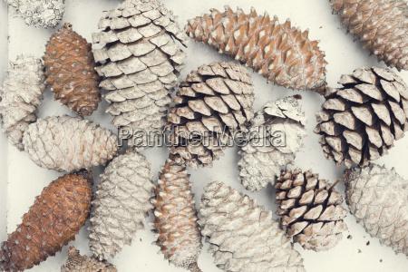 vintage pine cones winter time concept