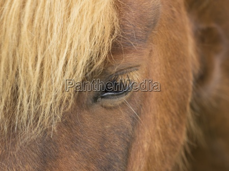 close of the forelock and head