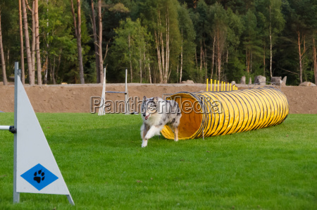 one, competition, in, agility, for, dog - 16034185