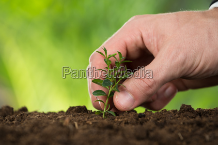 person hand planting small tree
