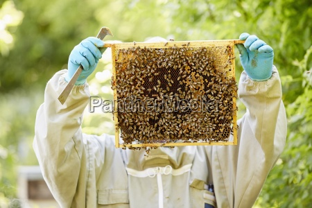 a beekeeper with blue gloves holding