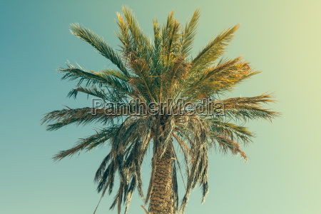 palm tree in erg chebbi at
