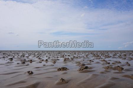 wadden sea panorama