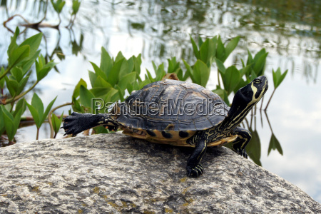 turtles and more in burglehen park