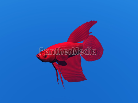 exempted veil fish