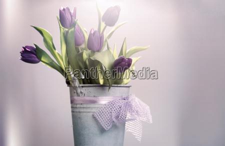 pink tulips in retro bucket