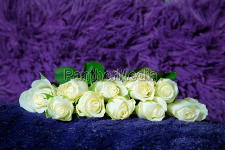 roses on purple pillow