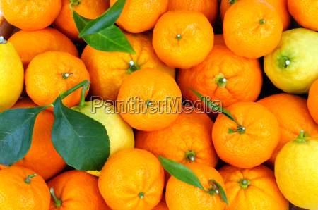 citrus fruit in the basket