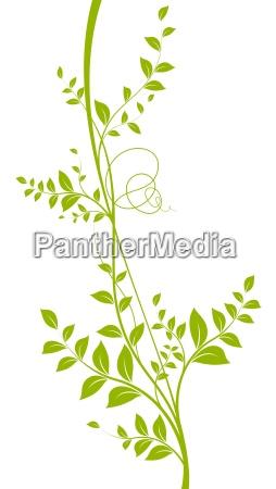 vector liana silhouette