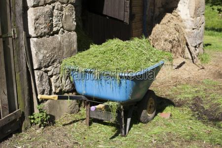 wheelbarrow with grass horizontal