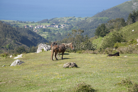 horses grazing at meadow