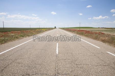 straight road between red flowers