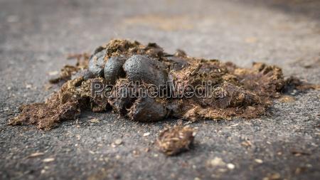 big horse droppings on an asphalt
