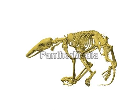 exempted skeleton anteater