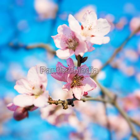 springtime