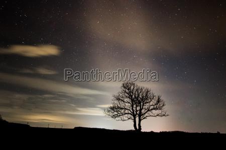 single tree and stars