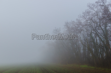 fog at baeume and field