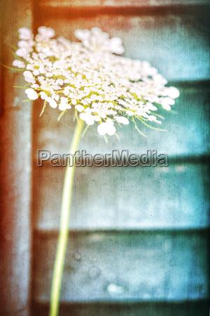 flor bonita da mola