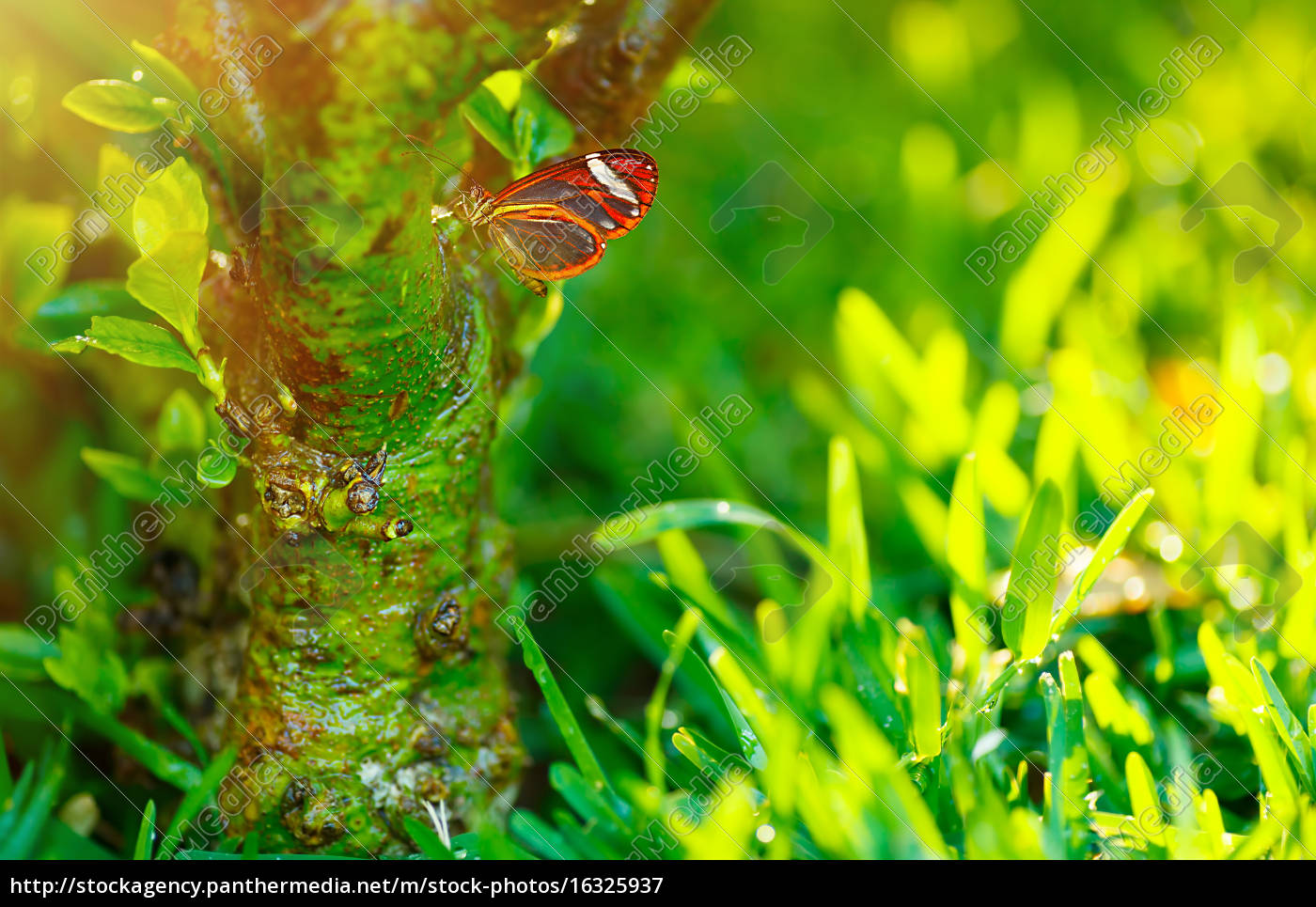 beautiful, butterfly, in, nature - 16325937