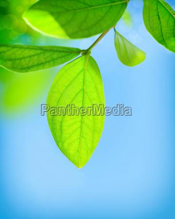 fresh, green, leaves - 16325935