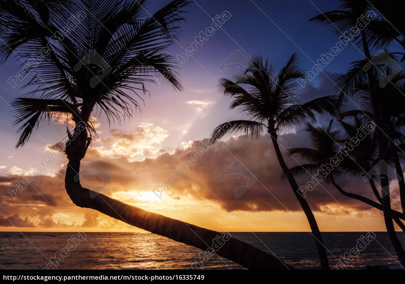 tropical, sunrise, or, sunset, with, palms - 16335749