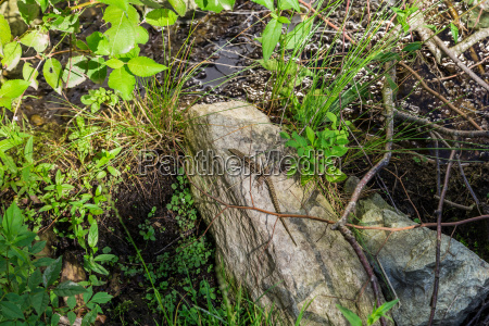 on the stone sunning lizard