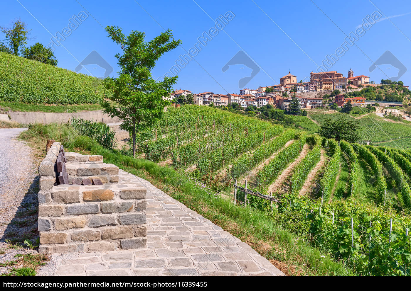 small, town, on, hill, and, vineyards - 16339455
