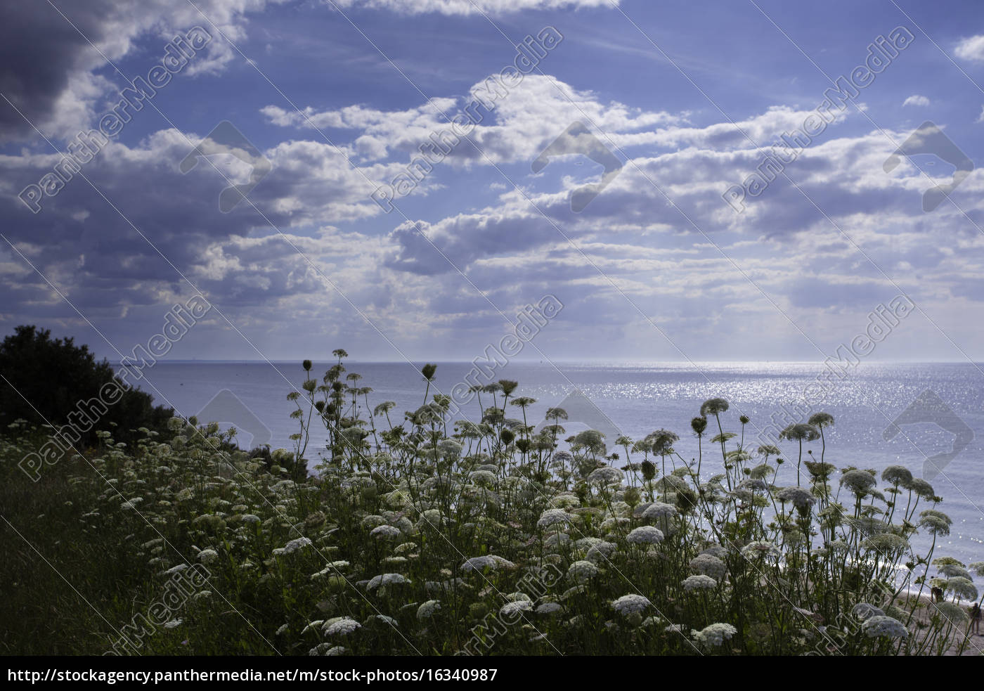baltic, sea, in, summer, with, sun - 16340987