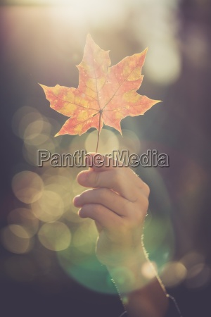 hand of boy holding autumn leaf