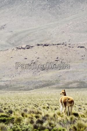 south america peru view of a